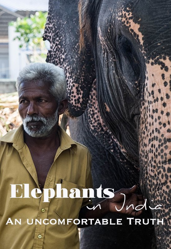 Seeing elephants in India was a dream come to true. However, elephant riding is a long standing tradition and change is slow to come.