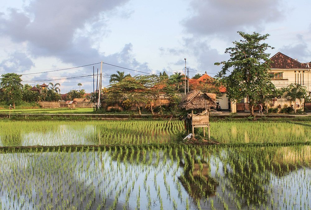 The 50 coolest Bali Airbnb under € 50.