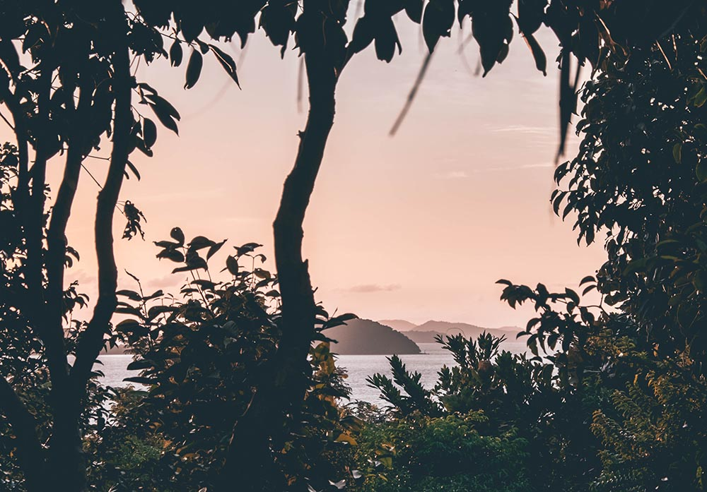 Live from the Jungle – The most unique Koh Yao Noi Accommodation.