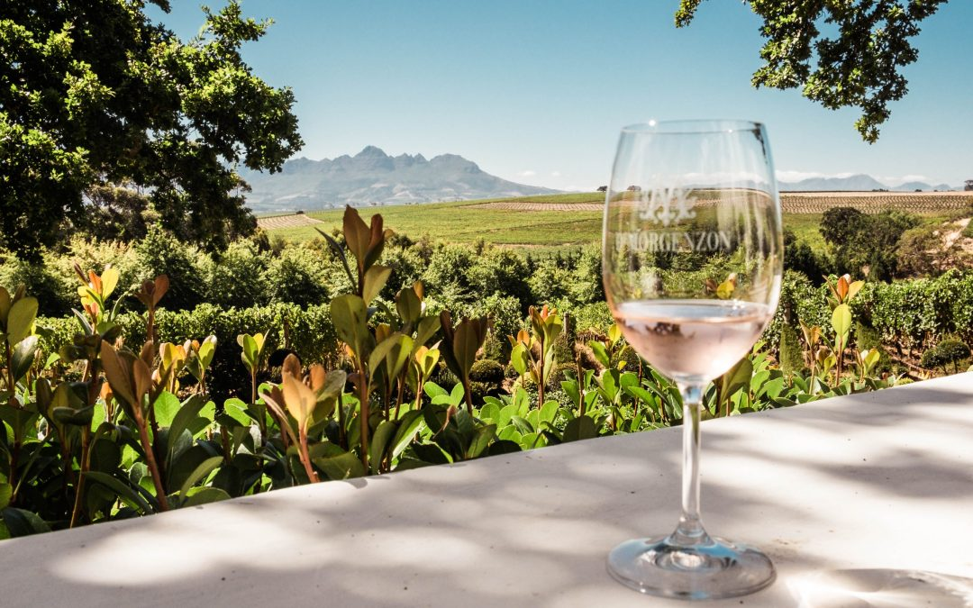 A Cape Town wine tour – Of kissing frogs & musical grapes.