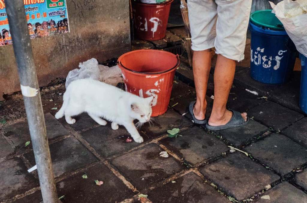 white cat next to someone's feet and red bucket in bangkok