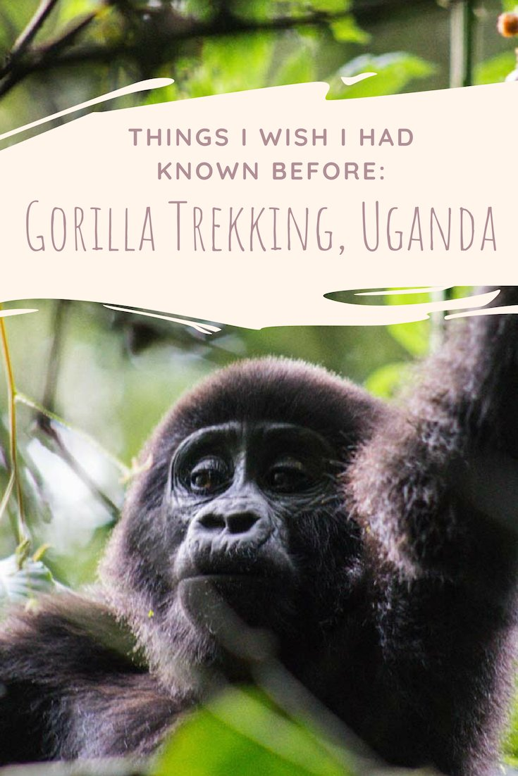Is your ultimate travel dream to go gorilla trekking in Uganda, Africa? Join the club and read this post because there are a few things I wish I had known before venturing into Bwindi Impenetrable National Park to find mountain gorillas in the mist. #gorillas #gorilla #uganda #africa #mountaingorilla #jungle #bwindi