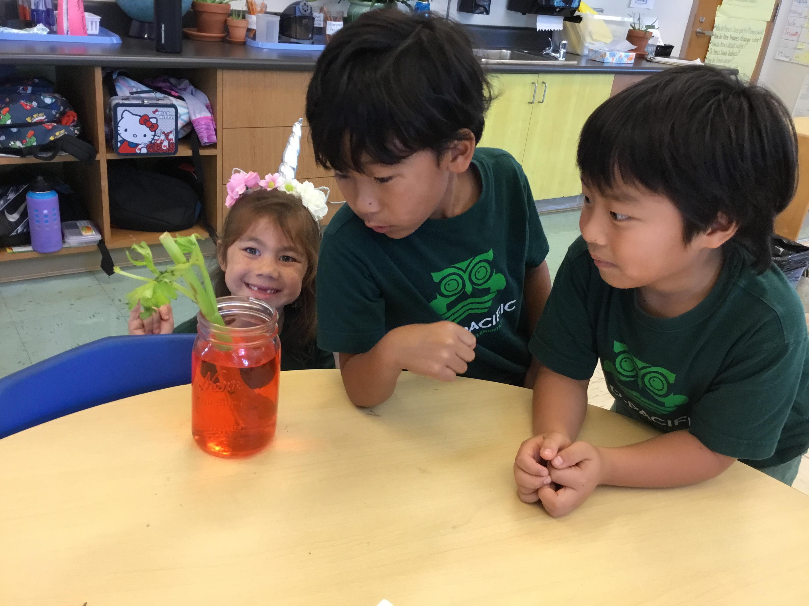 Experiments Making Learning Real