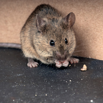 dealing with unwanted pest in the winter