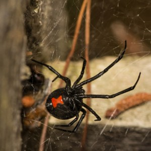 spider myths busted