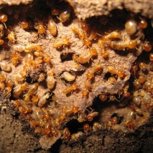 year round termite control