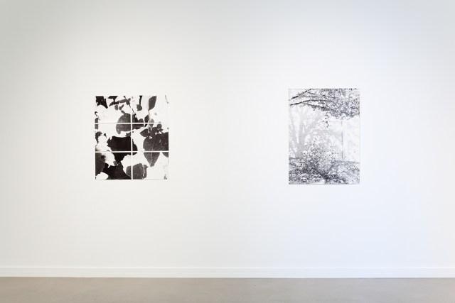 Jochen Lempert, installation view, Rochester Art Center. Left: Untitled (On photosynthesis), 2009. 6 b&w photographs, silver gelatin prints. 11 ½ x 15 ½ inches each. Right: Zur Photosynthese (On photosynthesis), 2009. B&w photograph, silver gelatin print. 40 ½ x 30 inches.