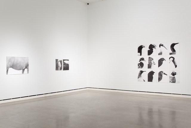Jochen Lempert, installation view, Rochester Art Center.