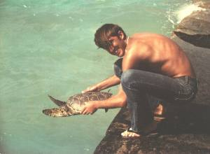 Tagging turtles at Midway Island