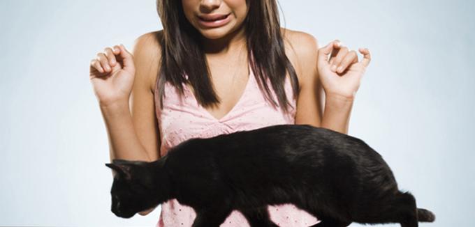miedo a los gatos