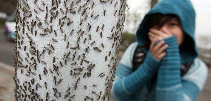 miedo a los insectos