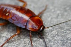 miedo a las cucarachas