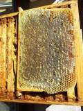 miel bio, miel, miel de montagne, miel des Pyrénées