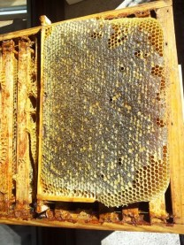 miel warré, miel de ruche warré, ruche warré