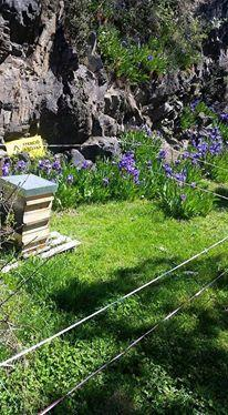 miel, miel de montagne, miel bio, miel naturel