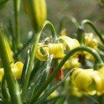 miel du comapedrosa, miel du parc naturel des vallées du comapedrosa, miel de haute montagne