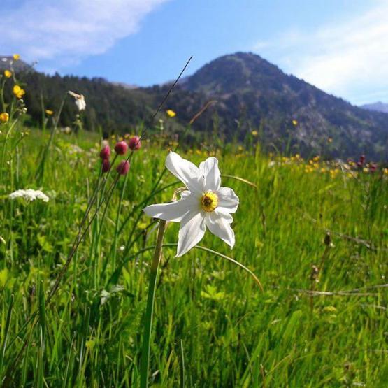 miel bio, miel écologique, miel naturel, miel de montagne, miel montagne, miel pyrenees, miel rare, miel haute montagne
