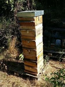 fonctionnement ruche warré, ruche bio, ruche écologique, ruche warre