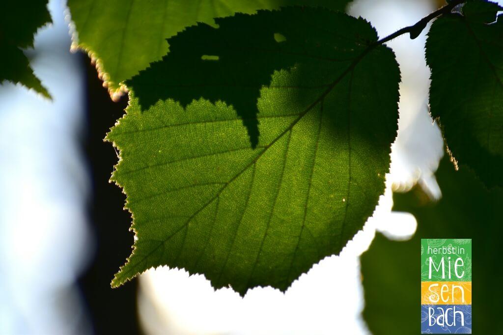 Herbst in Miesenbach (8)