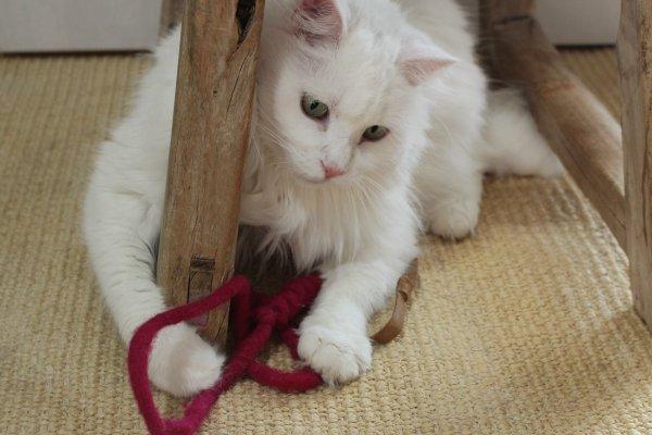 Katzenspielzeug aus Naturmaterial