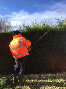 Hedge Trimming Newton Mearns 1