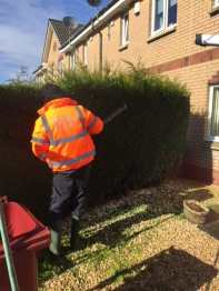 Hedge Trimming Newton Mearns 2