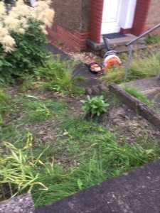 Garden Clearance Shawlands 2