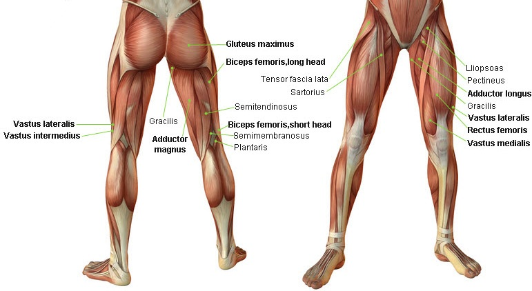 how to build leg muscles