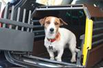 Variocage MiniMax Dog Crate