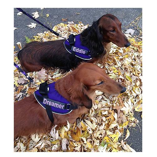 f67c8111fd2b Dachshund Dog Harness (Small Size) - Mighty Mite Dog Gear