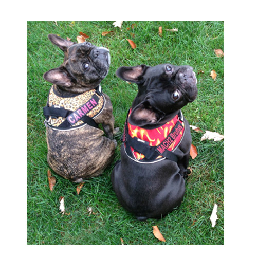 660406753f59 Small Dog Harness - Mighty Mite Dog Gear