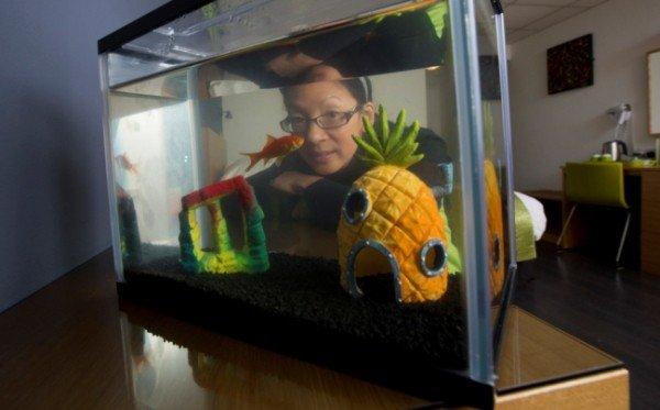 hotel offre pesce rosso contro lo stress