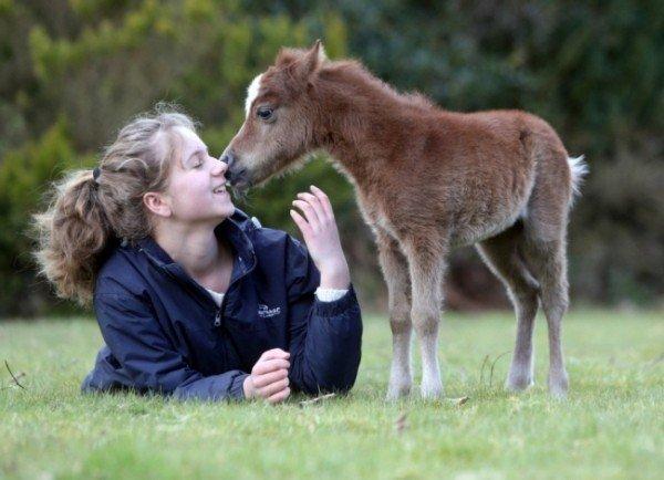 Sorrel: cavallo alto 50 centrimetri
