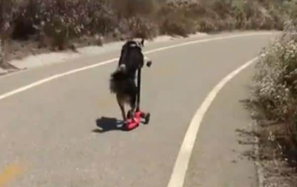 Video cane Jumpy in skateboard, surf