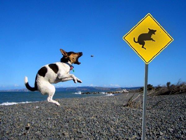 cartello stradale divertente (con animale)