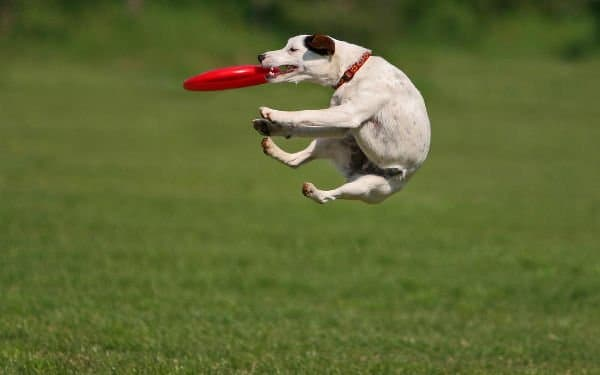 Cani Sport