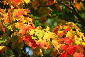 autumn 209479 640 - autumn-209479_640
