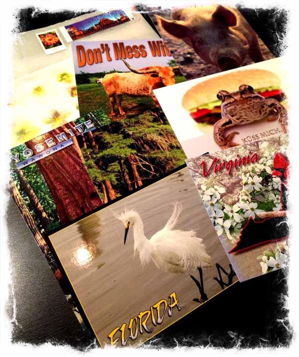 Sammakkokortti oli parasta antia tässä korttimäärässä. Nuo muutkin eläinkortit on kivoja, vaikka tykkään ite enemmän eläinkorteista ilman tekstiä.