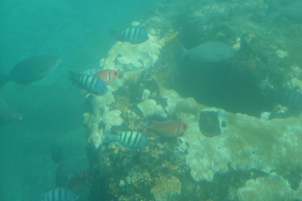 Tässä näkyy noita punertaviakin fisuja. Oli kyllä hienoa päästä näkemään vedenalaista elämää! Melkein kuin olisi sukellusveneessä ollut. :)