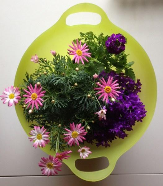 Tuo yksi kukka vähän jyrää noita muita tuossa kuvassa, mutta kolmea eri kukkaa sieltä löytyy. :)