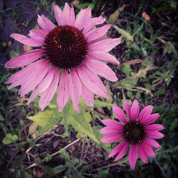 Joukkohaudassa kasvaa kaunis kukka.
