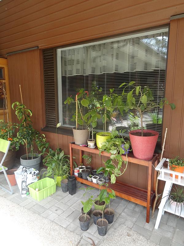 Tällä seinällä hengailee sisältä tuotuja kukkapöytiä ja sisäkasveja.
