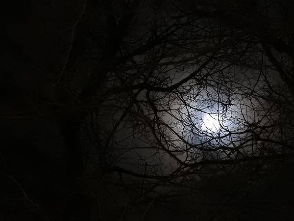 Joulupäivän täysikuu (eiks sillon se täysikuu ollut?!) pilkisteli oksien takaa.