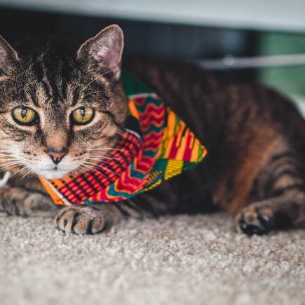 Cat in Beaux's Ties bandana