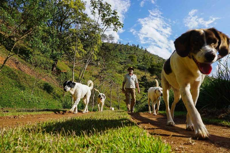 Ecolodge-Eldorado-honden