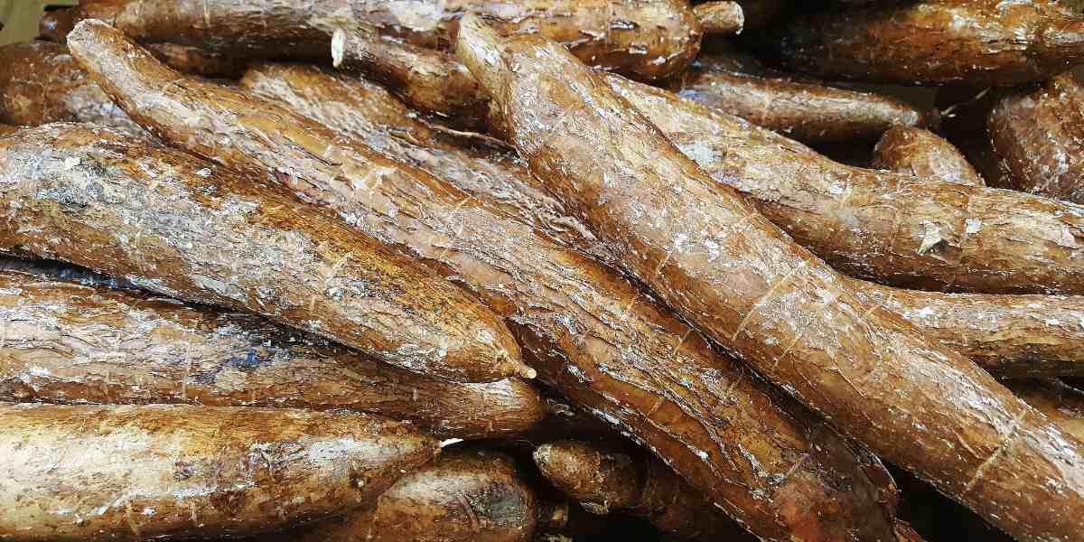 Voorraad Cassave wortels op elkaar gestapeld
