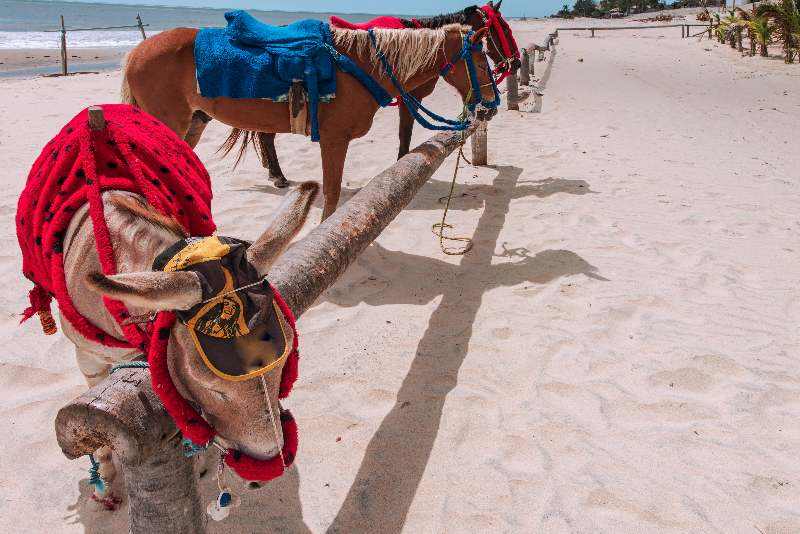 Paardrijden op het strand en in de duinen van Cumbuco