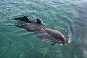 Walvis spotten Dolfijnen