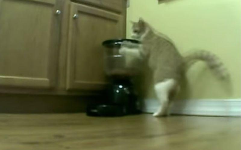 De kat en de automatische feeder