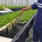植物工場と省エネ ~①根域だけを温度管理する次世代の水耕栽培システム(㈱良葉東部)~